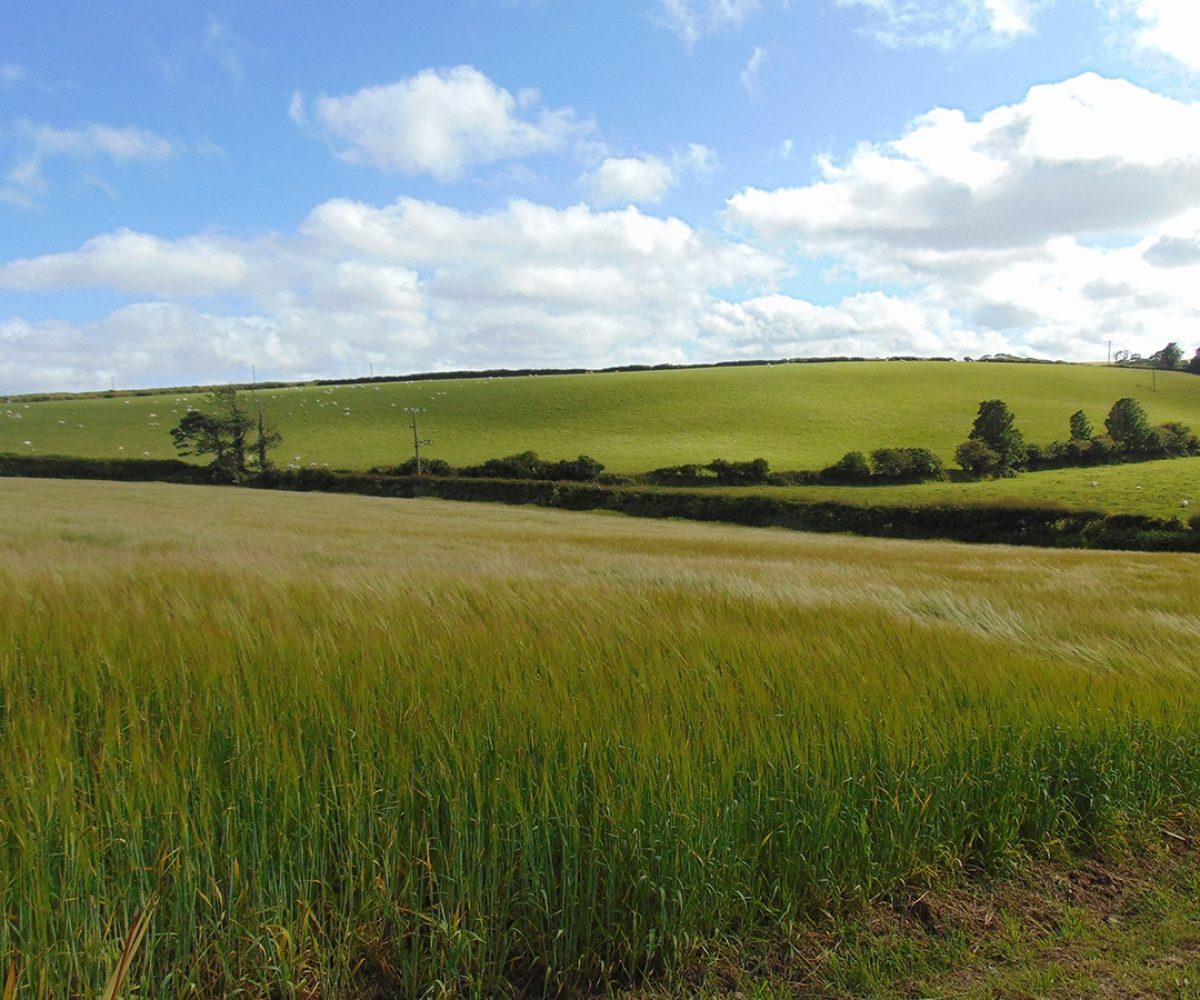 Landscape of fields with blue sky.
